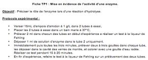 Glycemie Et Diabete La Catalyse Enzymatique Le Tp Sciences Nat
