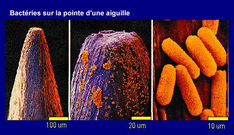 BacterieAiguille