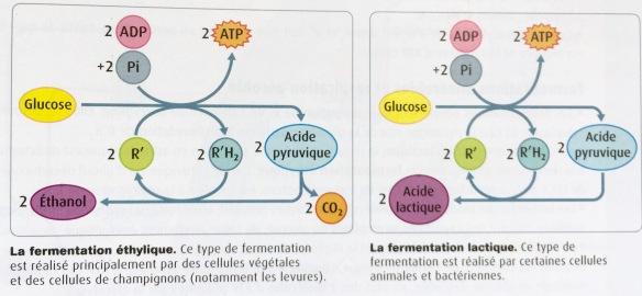 TS-energie-Belinp41-synthesFermentations