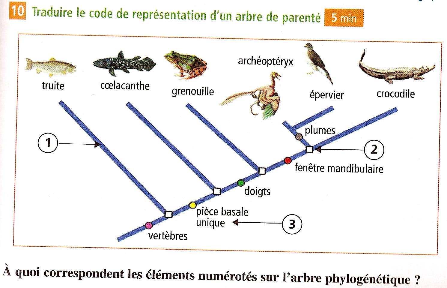 phylogene lycee