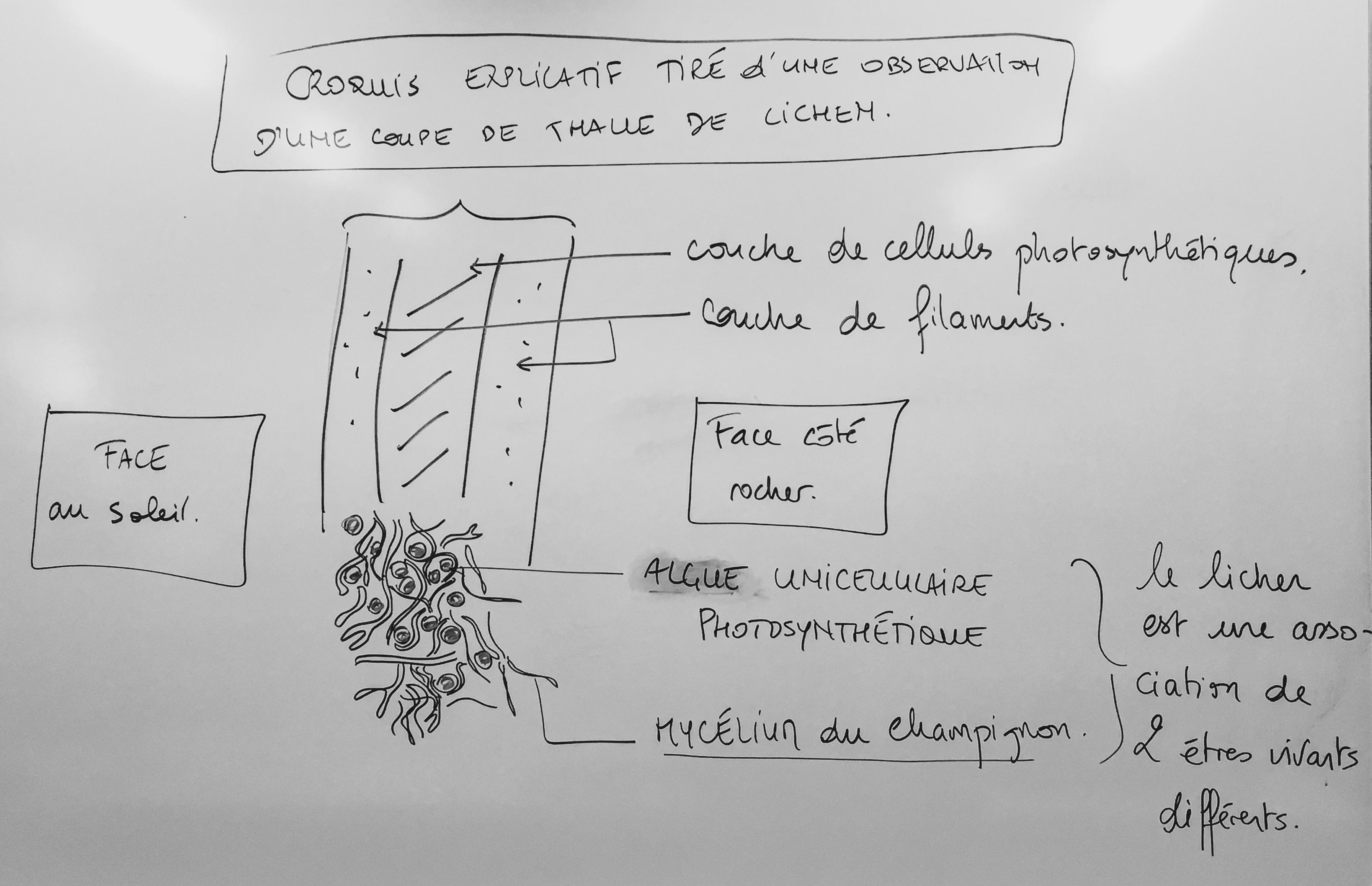 GRATUIT LYCÉE GRATUIT ANAGÈNE TÉLÉCHARGER